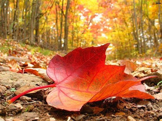 Découvrez les tendances de l'automne 2013 !